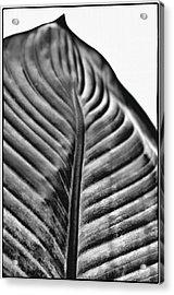 Large Leaf Acrylic Print