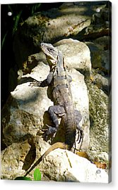 Acrylic Print featuring the photograph Large Lizard M by Francesca Mackenney