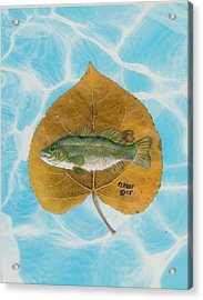 Large Mouth Bass #2 Acrylic Print