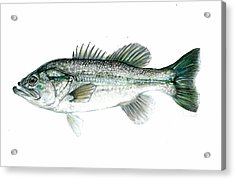 Large Mouth Bass Acrylic Print by Jim  Romeo