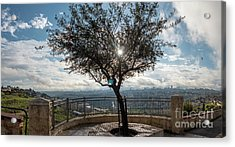 Large Tree Overlooking The City Of Jerusalem Acrylic Print