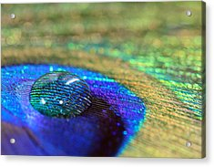 Acrylic Print featuring the photograph Large Water Drop On A Feather by Angela Murdock