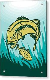 Largemouth Bass Preying On Perch Fish Acrylic Print by Aloysius Patrimonio