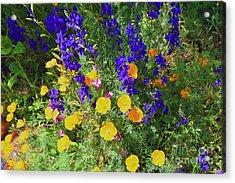 Larkspur And Primrose Garden Acrylic Print