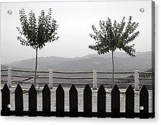 Laroles 38 Acrylic Print by Jez C Self