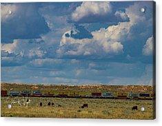 Las Vacas Y El Tren Acrylic Print by John Vigil