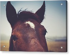 Acrylic Print featuring the photograph Lashes by Shane Holsclaw