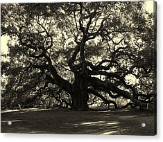 Last Angel Oak 72 Acrylic Print