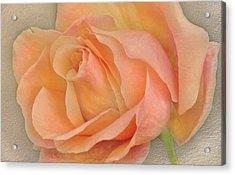 Last Autumn Rose Acrylic Print