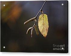 Last Call Of Fall Acrylic Print by Randy Bodkins