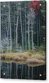 Last Color Acrylic Print by William A Lopez