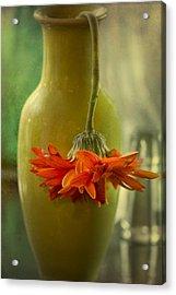 Last Daisy Acrylic Print