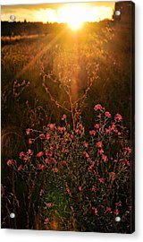 Acrylic Print featuring the photograph Last Glimpse Of Light by Jan Amiss Photography