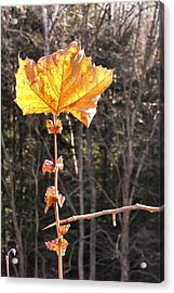 Last Leaf Acrylic Print by JAMART Photography