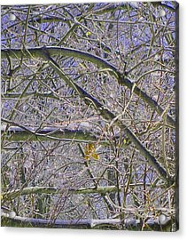 Last Leaf Of Winter Acrylic Print by Misty VanPool