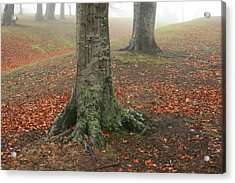Last Leaves Of Autumn Acrylic Print by Terry Perham