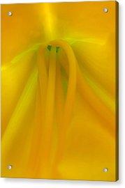 Last Light Acrylic Print by Juergen Roth