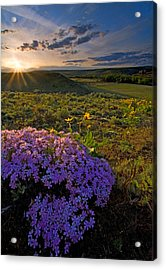 Last Light Of Spring Acrylic Print by Mike  Dawson