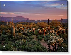 Acrylic Print featuring the photograph Last Light On The Sonoran  by Saija Lehtonen