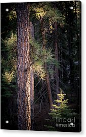 Acrylic Print featuring the photograph Last Light by The Forests Edge Photography - Diane Sandoval