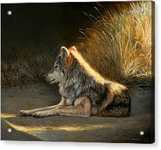 Last Light - Wolf Acrylic Print
