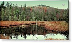 Acrylic Print featuring the photograph Last Of Autumn On Fly Pond by David Patterson