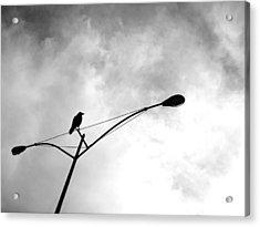 Last One Standing Acrylic Print by Jeff DOttavio