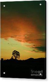 Last Rays Of Light Acrylic Print by Angel  Tarantella