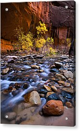 Last Remaining Gold Acrylic Print
