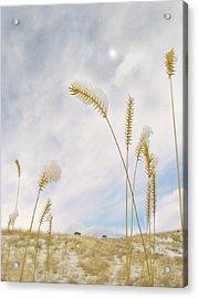 Last Snow Acrylic Print by John Poon