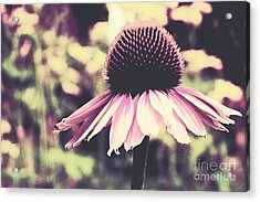 Last Summer Acrylic Print by Angela Doelling AD DESIGN Photo and PhotoArt