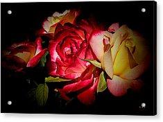 Last Summer Roses Acrylic Print by Gabriella Weninger - David