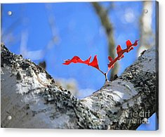 Acrylic Print featuring the photograph Last To Leaf by Debbie Karnes