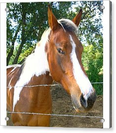 Last Week, I Met My First #horse! She Acrylic Print
