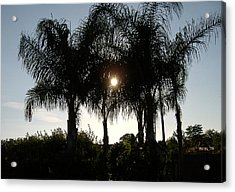 Late Afternoon Sun Acrylic Print by Diane Ferguson
