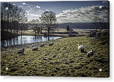 Late Fall Pastoral Acrylic Print