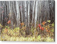 Acrylic Print featuring the photograph Late Fall Splendour by Rob Huntley