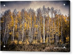 Acrylic Print featuring the photograph Late Fall by The Forests Edge Photography - Diane Sandoval