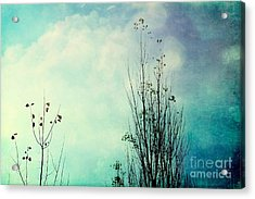 Late October - 79-2bl1 Acrylic Print by Variance Collections