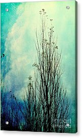 Late October - 80-2bl1 Acrylic Print by Variance Collections