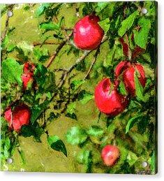 Late Summer Apples Acrylic Print by Ken Morris