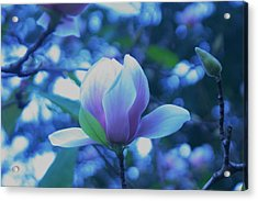 Late Summer Bloom Acrylic Print by John Glass