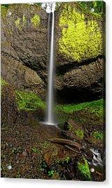 Latourell Falls Acrylic Print by Jonathan Davison