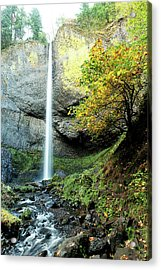 Latourell Falls Acrylic Print
