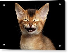 Laughing Kitten  Acrylic Print by Sergey Taran