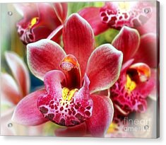 Laughing Orchids Acrylic Print by Sue Melvin