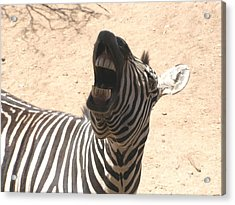 Acrylic Print featuring the photograph Laughing Zebra by Jeanette Oberholtzer