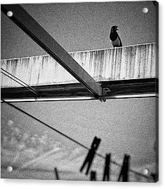 Laundry Bird  #bird #animal Acrylic Print