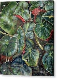 Laura's Begonia Acrylic Print by Karen Boudreaux