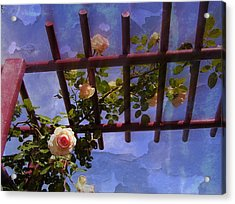 Laura's Rose Trellis 2 Acrylic Print by Jen White